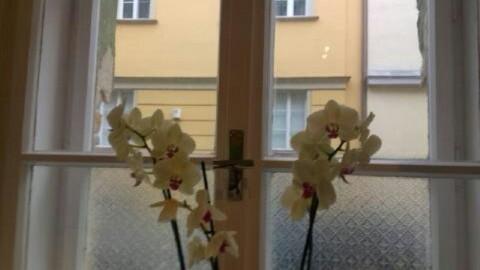 Reinigung von Fenstern, Fassaden und Jalousien in München